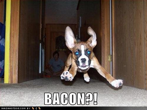 funny-dog-pictures-dog-runs-to-bacon